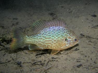 Welche fische in blau hobby gartenteich for Welche fische in teich
